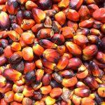 Harga CPO Merosot, Harga Biodiesel Februari Diturunkan