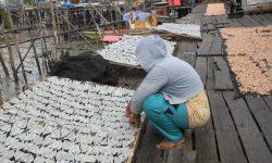 Desa Binalawan Sentra Produksi Ikan  dan Udang Kering