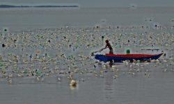 Tali Rumput Laut Mengancam Keselamatan Pelayaran di Nunukan
