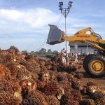 Bertemu Jokowi, PM China Setuju Tambah Impor CPO 500 Ribu Ton