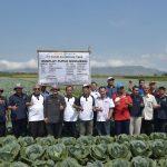 Keberhasilan Demplot Pupuk Kaltim: Tingkatkan Produktifitas Hasil Pertanian Jember hingga 30 Persen