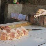 Stok Ayam Potong Menipis di Pasar Nunukan Harga Rp38 Ribu per Kilogram
