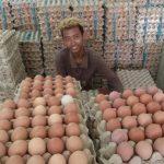 Harga Telur Ayam di Nunukan Masih Dianggap Normal