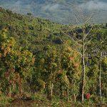 Kelembagaan Kesatuan Pengelolaan Hutan  Perlu Diperkuat