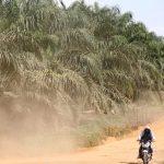 Presiden Teken Perpres Sistem Sertifikasi Perkebunan Kelapa Sawit Berkelanjutan Indonesia