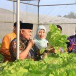 Diversifikasi Pangan: Isran Makan Selada, Kaltim 2019 Kembangkan Sukun