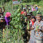 Satgas Pamtas, Yon Raider 613/RJA Panen Sayuran Bersama Masyarakat