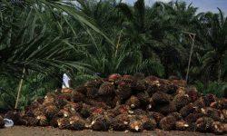 Gubernur Kaltim Minta Lebih Besar Bagian Dana Pungutan Ekspor CPO