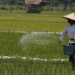 Hanya Punya Sawah 30 Hektar, Kebutuhan Beras di Bontang Dipasok dari Luar