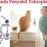 Penyakit Toksoplasma pada Kucing, Mengancam Ibu Hamil