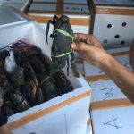 Ekspor Kepiting ke China Terhenti Akibat Wabah Virus Corona