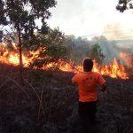 Api Kembali Membakar Lahan Kosong Seluas 4 Hektar