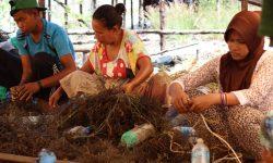 Sebab Gatal-gatal Petani Rumput Laut Masih Tanda Tanya