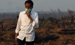 Mahkamah Agung Vonis Presiden Joko Widodo Melanggar Hukum dalam Kasus Kebakaran Hutan