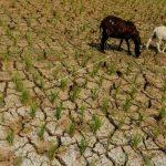 BMKG: Sejumlah Wilayah Indonesia Berpotensi Kekeringan