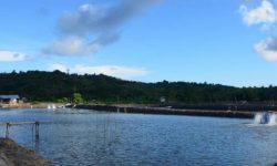 KKP Targetkan Produksi Udang Dua Juta Ton Tahun 2024