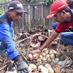 Temuan 33 Telur Ular Piton di Samarinda Bikin Ngeri