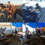 Kualitas Menurun, Kamaruddin Datangkan Peneliti Rumput Laut