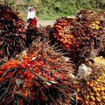Soal Sawit, Menlu: Indonesia Bekerjasama dengan Belanda Berdayakan Petani