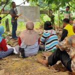 Produksi Kakao Menurun Disebabkan Hama