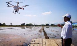 Tabur Pupuk dan Benih, Petani di Sukoharjo Gunakan Drone