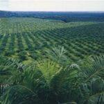 Kutai Kartanegara Miliki Tanaman Perkebunan 266.439 Hektar