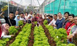 KBRI Bandar Seri Begawan Fasilitasi Pelatihan PMI Bertanam Secara Hidroponik