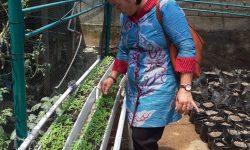 Tanaman Hidroponik, Solusi di Tengah Minimnya Lahan Pertanian