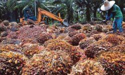 Indonesia Gugat Uni Eropa ke WTO Atas Tuduhan 'Diskriminasi Sawit'