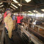 Ismu Ajak Perusahaan Dukung Komunitas Peternak Mandiri Sangatta
