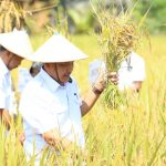 Petani Kutim Berpeluang Pasok Kebutuhan Pangan ke IKN