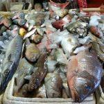 Jelang Tahun Baru, Pasokan dan Stok Ikan Aman