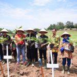 Tingkatkan Ekspor dan Ekonomi Daerah, Pemerintah Dorong Pengembangan Kawasan Hortikultura