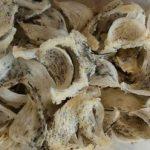 Potensi Ekspor Sarang Walet dari Kaltim Terus Terbuka Lebar