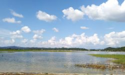 Cerita Petani di Lempake, 300 hektare Sawah Gagal Panen Akibat Banjir Sepekan