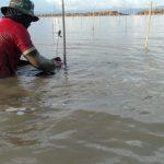 Hutan Mangrove Sebatik Diharapkan Jadi Wisata Alam Perbatasan
