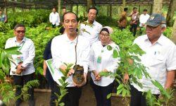 Presiden: Sudah Saatnya Perhatikan Ekosistem Flora dan Fauna serta Reboisasi