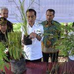 Presiden Jokowi: Kita Harus Bersahabat dengan Lingkungan dan Alam