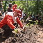 Presiden Jokowi Minta Penanaman Kembali Harus Jutaan bukan Ribuan Tanaman