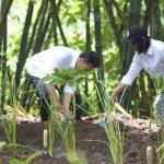 Bersama Warga, Presiden Jokowi Hijaukan Desa Jatisari, Wonogiri dengan Sistem Agroforestry