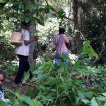 Ekonomi Petani di Kaltim Mulai Terdesak