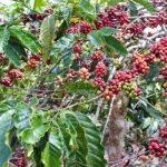 Di Tengah Wabah Corona, Ekspor Pertanian Naik Sebesar USD 320 Juta