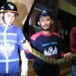 Relawan dan Warga Samarinda Tangkap King Cobra 2,5 meter di Kantor Lurah