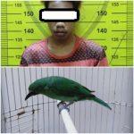Burung yang Dicuri Harganya Rp7,5 Juta, Dijual Cuma Rp200 Ribu