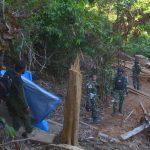 Satgas Pamtas dan Polhut Nunukan Temukan 7 Kubik Kayu Tak Bertuan di Hutan Lindung