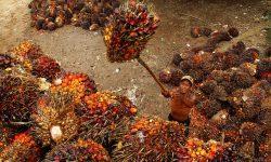 Negara-negara Produsen Minyak Sawit Perkuat Kerja Sama