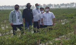 Teknologi Future Farming 4.0 Milik RNI Mulai Diujicoba di Subang