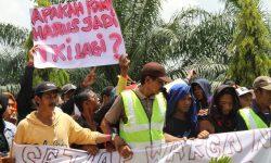 IUP Dicabut Bupati, Perusahaan Sawit PT NJL Stop Beroperasi