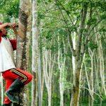 Produksi Perkebunan Rakyat di Kaltim Mencapai 2,36 Juta Ton per Tahun