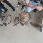 Polisi Bongkar Dugaan Jual Beli Daging Penyu di Bontang